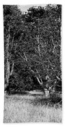 Young Baobab Trees  Bath Towel