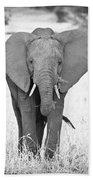 Young Bull Elephant Bath Towel