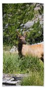 Young Bull Elk - Yellowstone National Park - Wyoming Bath Towel