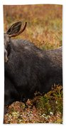 Young Bull Moose Being Aggressive Bath Towel