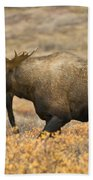 Young Bull Moose Bath Towel