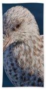 Young Herring Gull Bath Towel