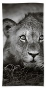 Young Lion Portrait Bath Towel