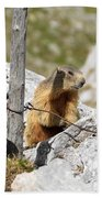 Young Marmot Bath Towel