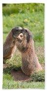Young Marmots Bath Towel