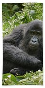 Young Mountain Gorilla Bath Towel