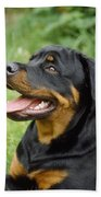 Young Rottweiler Bath Towel