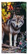 Young Timber Wolf Bath Towel