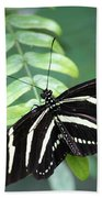 Zebra Butterfly Hand Towel