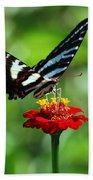 Zebra Swallowtail Butterfly On A Red Zinnia Bath Towel