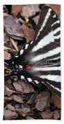 Zebra Swallowtail Butterfly Square Hand Towel