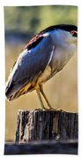Black-crowned Night Heron Bath Towel
