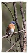 Sucarnoochee River - Bluebird Bath Towel