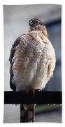 04 Falcon Bath Towel