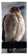 06 Falcon Hand Towel