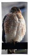 06 Falcon Bath Towel