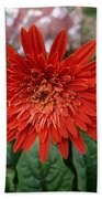 A Beautiful Red Flower Growing At Home Bath Towel
