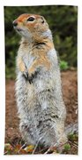 Arctic Ground Squirrel Bath Towel