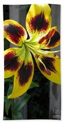 Asiatic Lily Named Black-eyed Cindy Bath Towel