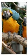 Blue And Gold Macaw Bath Towel