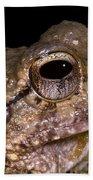 Bobs Robber Frog Bath Towel