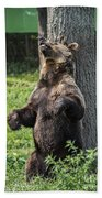Brown Bear Itch Bath Towel