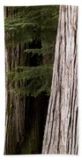 Cedar Trees, Whistler, British Columbia Bath Towel