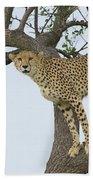Cheetah Acinonyx Jubatus Female Bath Towel