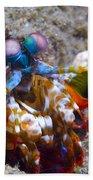 Close-up View Of A Mantis Shrimp, Papua Bath Towel