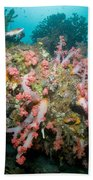 Colorful Reef Scene, Komodo, Indonesia Bath Towel
