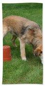 Dog Playing Bath Towel