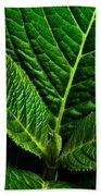 Emerging Hydrangea Leaf Bath Towel by  Onyonet  Photo Studios