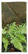 Ferns Bath Towel