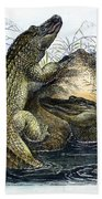 Florida Alligators Bath Towel