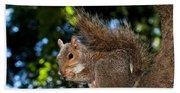 Gray Squirrel Hand Towel