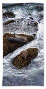 Harbor Seals Bath Towel