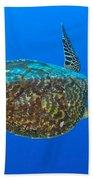 Hawksbill Sea Turtle, Kimbe Bay, Papua Bath Towel