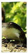 Immature Hooded Merganser Bath Towel