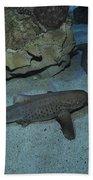 Leopard Shark Courting, Blue Zoo Bath Towel