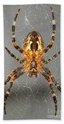 Marbled Orb Weaver Spider Bath Towel