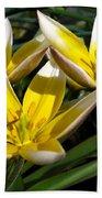 Mini Botanical Tulip Named Dasystemon Tarda Bath Towel
