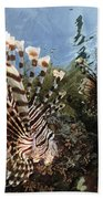 Pair Of Lionfish, Indonesia Bath Towel