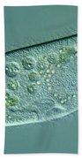 Paramecium Caudatum Bath Towel