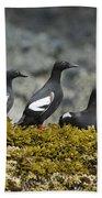 Pigeon Guillemot Cepphus Columba Group Bath Towel