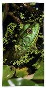 Rana Clamitans Or Green Frog Bath Towel