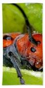 Red Milkweed Beetle Bath Towel