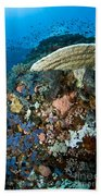 Reef Scene With Corals And Fish Bath Towel