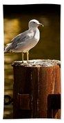 Ring-billed Gull On Pillar Bath Towel