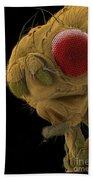 Sem Of A Mutant Fruit Fly Bath Towel