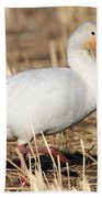 Snow Goose Bath Towel